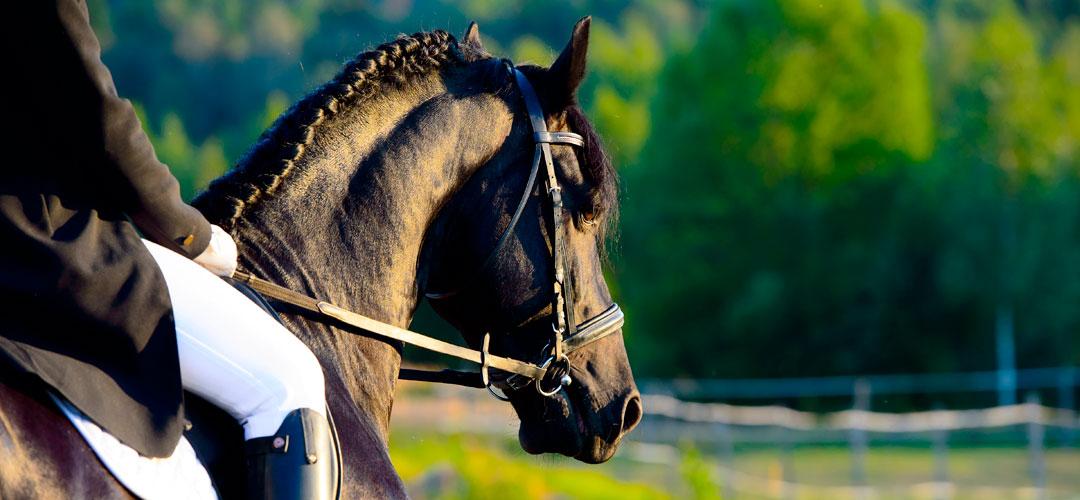 Lesiones del tobillo en deportistas amateur - Equitación